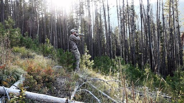 6.12 Long Season Wapiti - Bull Elk in Montana with Remi Warren