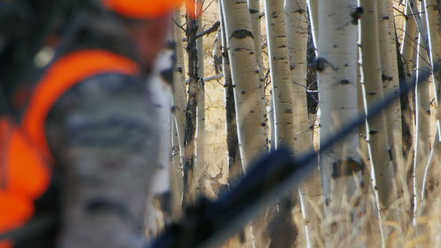 6.7 3rd Season CO - Rifle Hunt for Mule Deer in the Rut with Tim Burnett