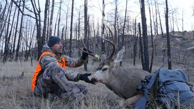 7.9 Ice Breaker Buck - Mountain Mule Deer with Tim Burnett