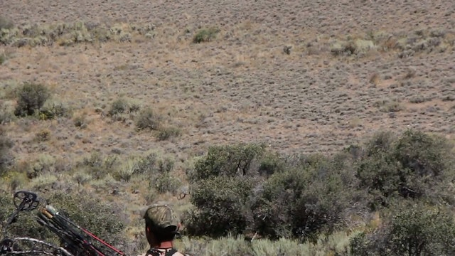 5.2 Nevada Mule Deer with Remi Warren