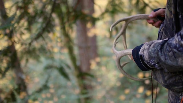 7.7 Trophy Places - Blacktail Deer with Brian Call