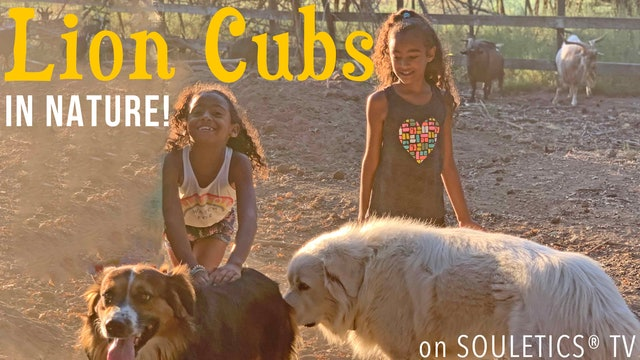 Lion Cubs Adventures in Nature