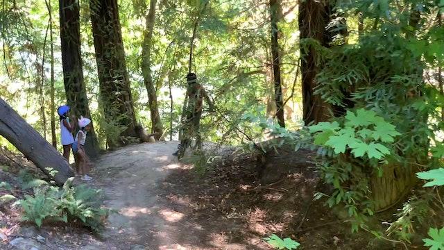 Bike Tour through Humboldt County Redwoods California