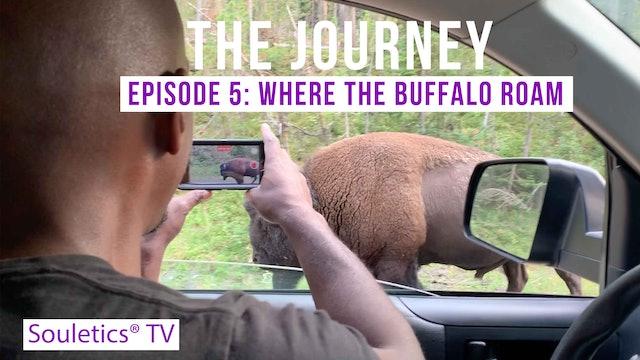 Journey Episode 5: Where the Buffalo Roam