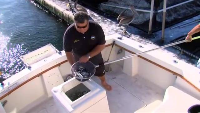 SF526 Small Boat Fishing
