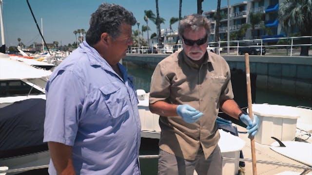 574 Gail Force Yellowtail Fishing