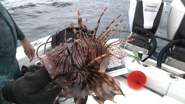 Ocean Explorer_Lionfish in Sarasota
