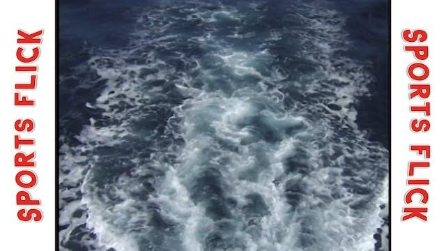 Ocean Explorer_San Diego Great White