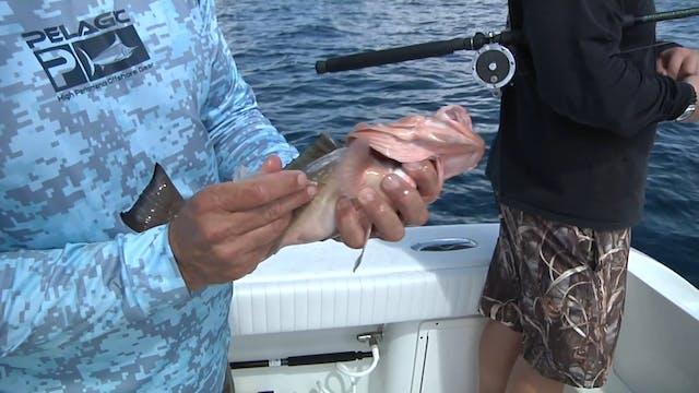 Ocean Explorer_Sarasota Grouper