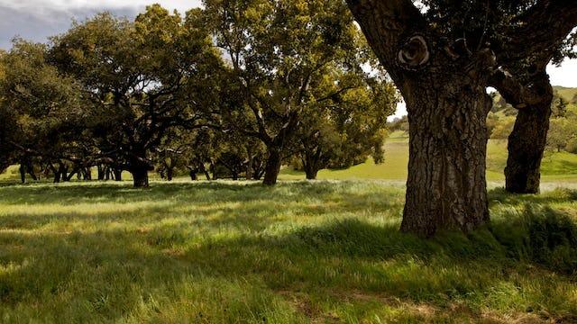 Santa Ynez Valley / HDSereneScapes® Film