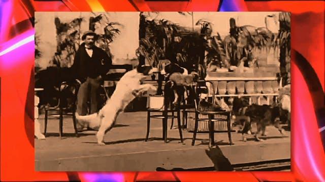 Circus Fun 035