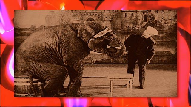 Circus Fun 006R