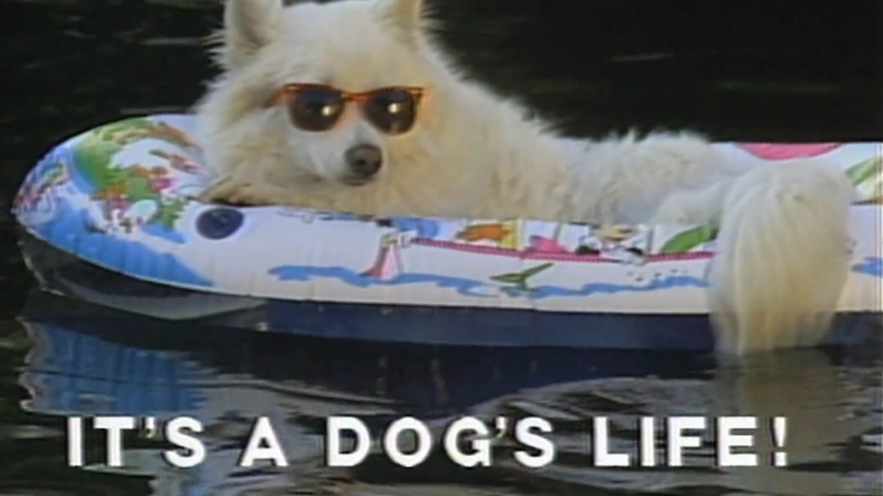 It's A Dogs Life
