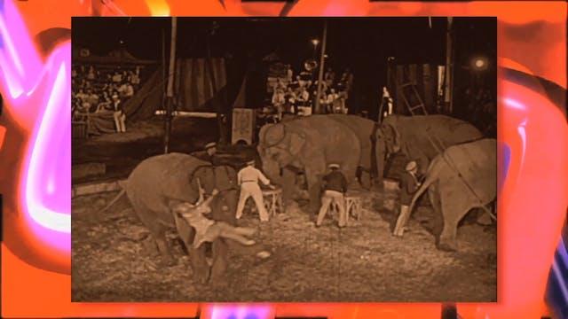 Circus Fun 014R