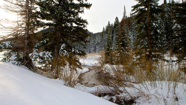 Winter Snow / HDSereneScapes® Film