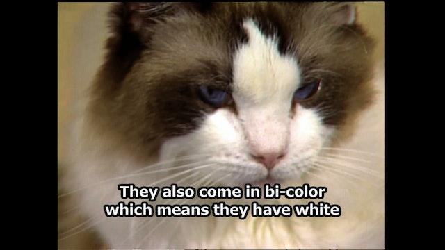 Hear, Kitty Kitty 03