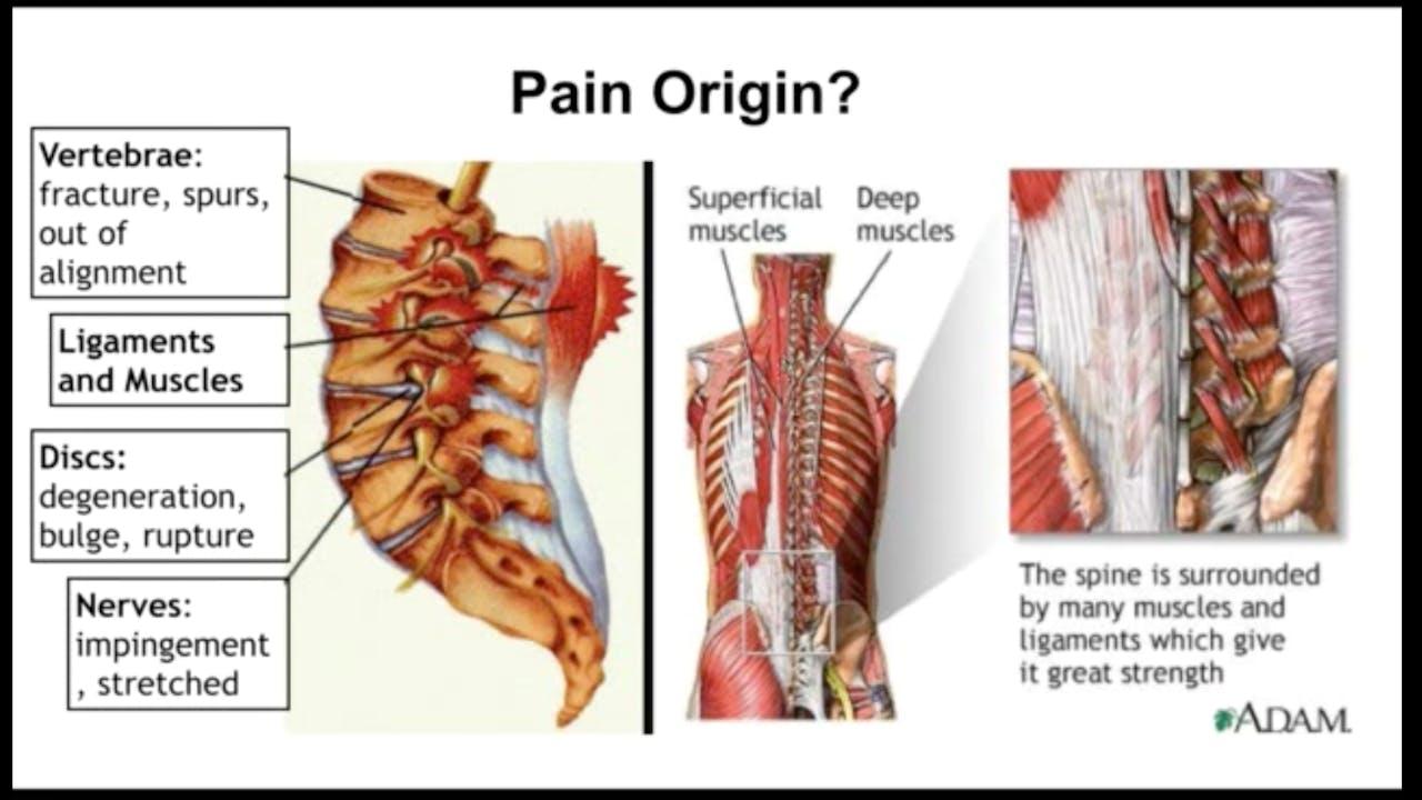 Back, Neck, and Postural Care by Dr. Hagit Berdishevsky