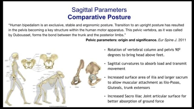 Sagittal Plane Analysis and Treatment Considerations -  Parts 1, 2, and 3 by Dr. Hagit Berdishevsky