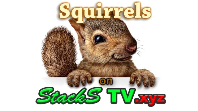 squirrels6