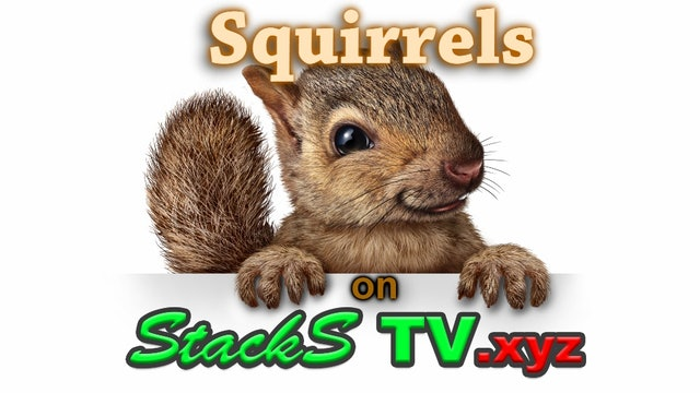 Squirrels the Show