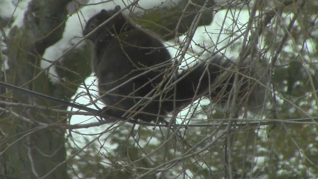 squirrels9