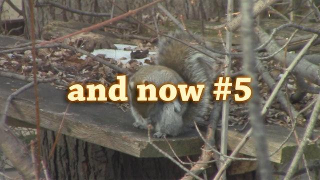 squirrels5
