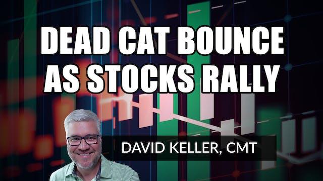 Dead Cat Bounce as Stocks Rally | Dav...