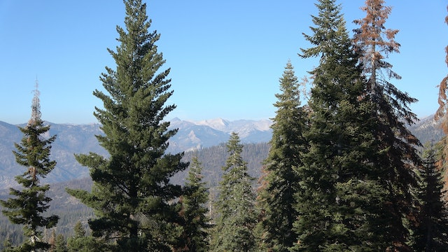 Sequoia National Park & Catskill Mountain State Forest