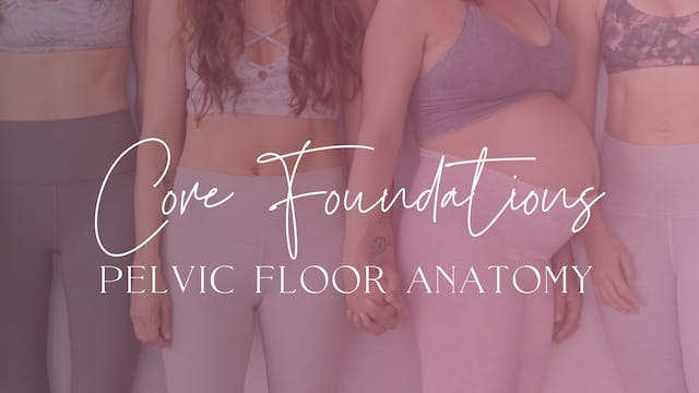 Pelvic Floor Anatomy