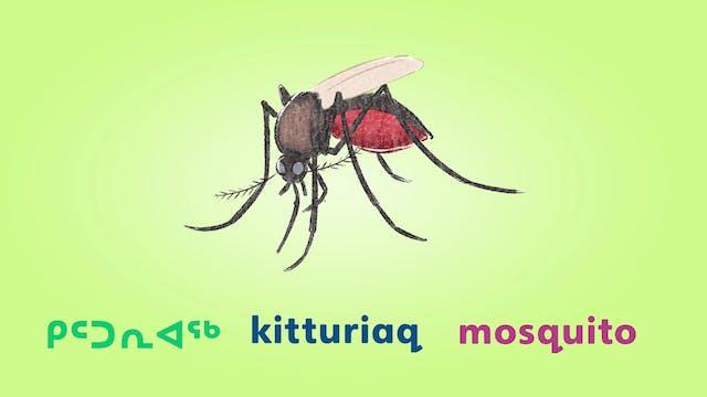 ᖁᐱᕐᕈᑦ • Bugs