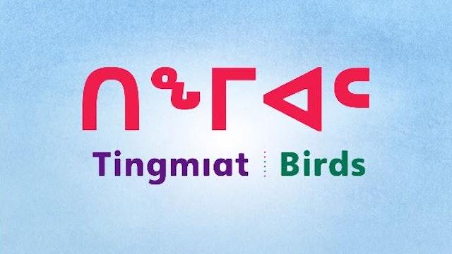 ᑎᖕᒥᐊᑦ • Birds