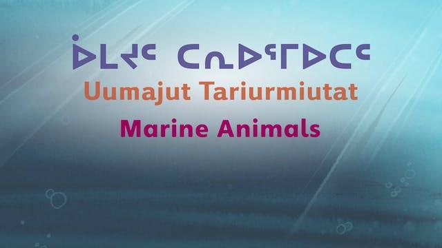 ᐆᒪᔪᑦ ᑕᕆᐅᕐᒥᐅᑕᑦ • Marine Animals