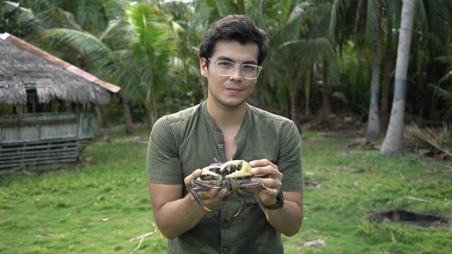 Mud Crab in Dumaguete