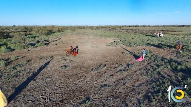 Episodio 13: Las increíbles imágenes de Castella toreando a campo abierto.