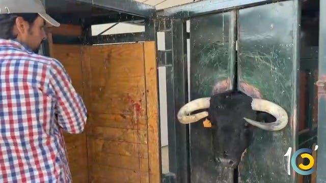 Episodio 59: Perera arregla los toros...