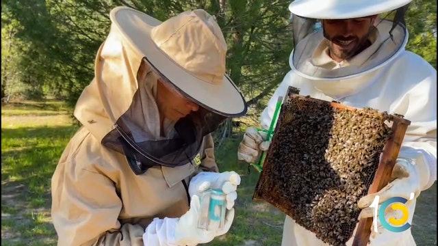 Episodio 41: El curioso 'herradero' de Lea con sus abejas.