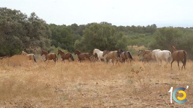 Episodio 29: Castella nos sigue descubriendo su impresionante yeguada.