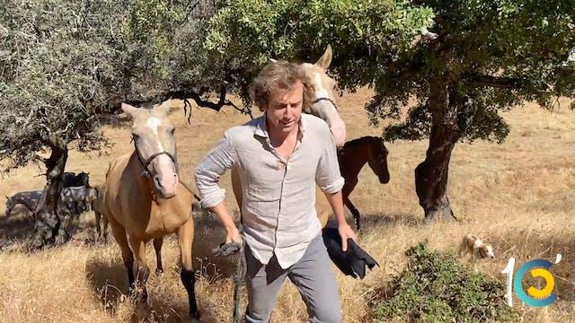 Episodio 10: Román cuaja una vaca y v...