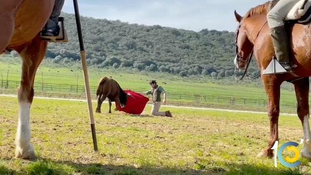 Episodio 38: Perera disfruta a campo abierto.