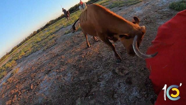 Episodio 14: Las imágenes exclusivas de Castella a campo abierto.