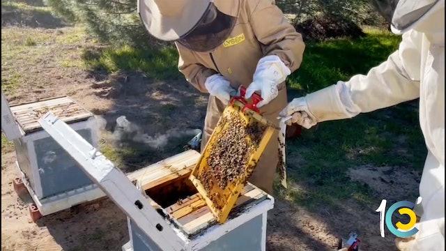 Episodio 40: Lea y los peligros de buscar a la abeja reina.