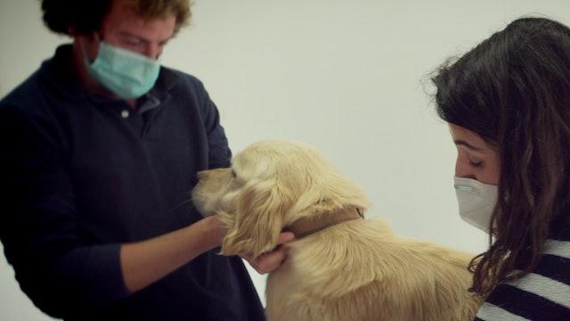 Episodio 3: Román lleva a Polo al veterinario