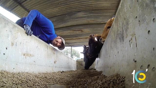 Episodio 26: Los secretos de El Fandi alimentando a su ganadería.