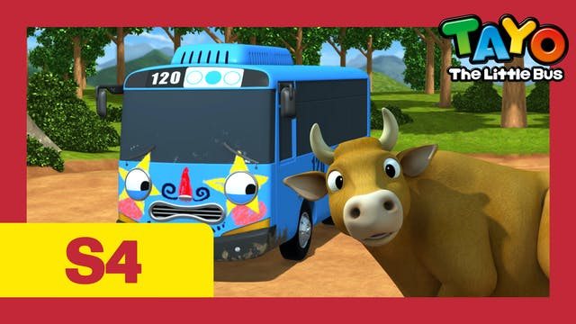 Tayo the Little Bus S4 EP17 - Tayo go...