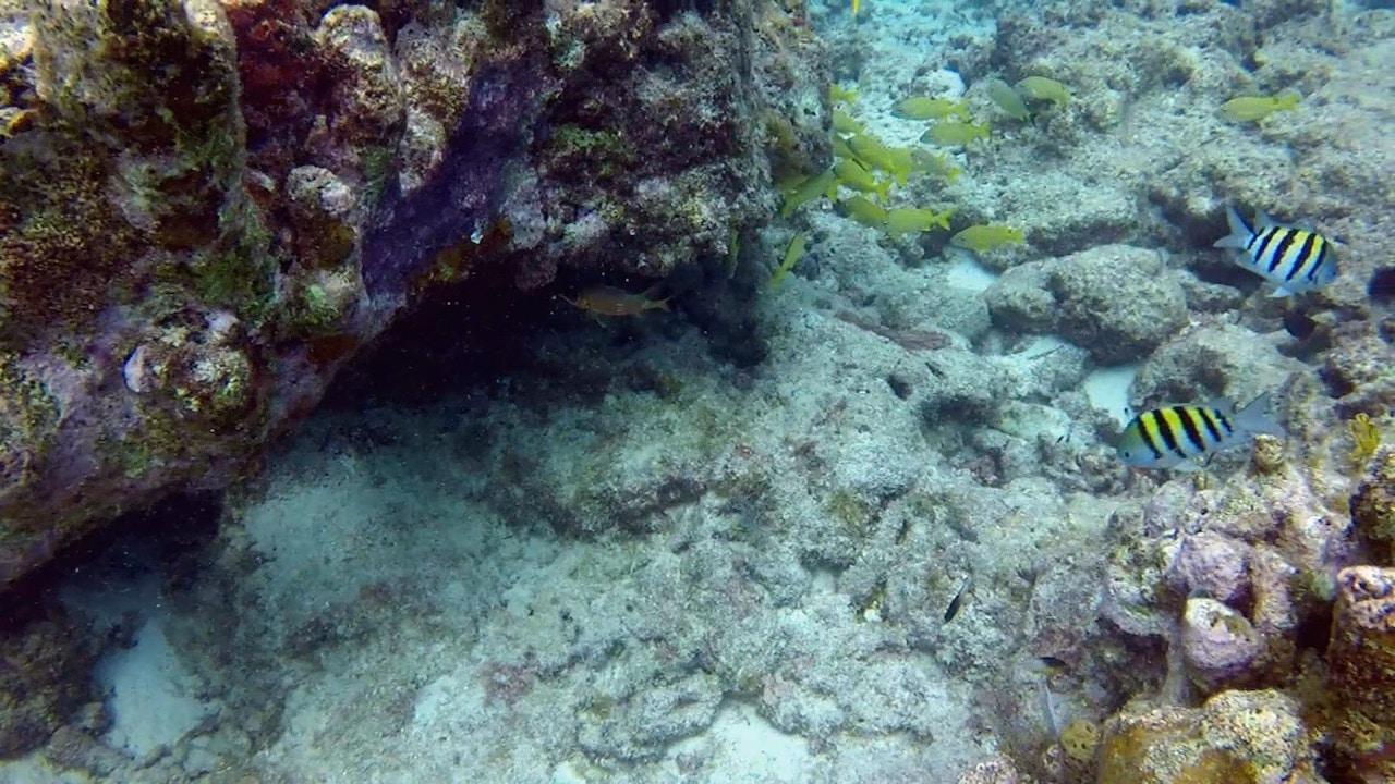 Watch Exploring God's Ocean: An Underwater Adventure
