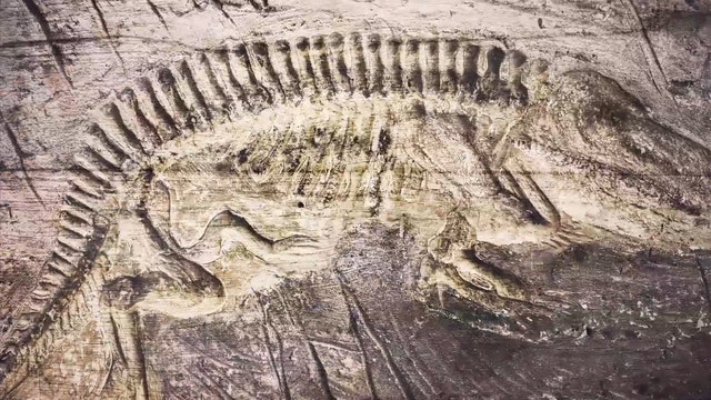 Frank Sherwin   Fossils