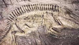 Video Image Thumbnail: Frank Sherwin | Fossils