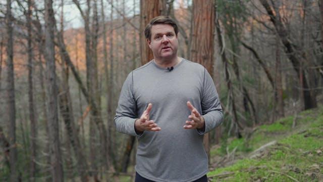 Amazing Sequoias: God's Living Giants...
