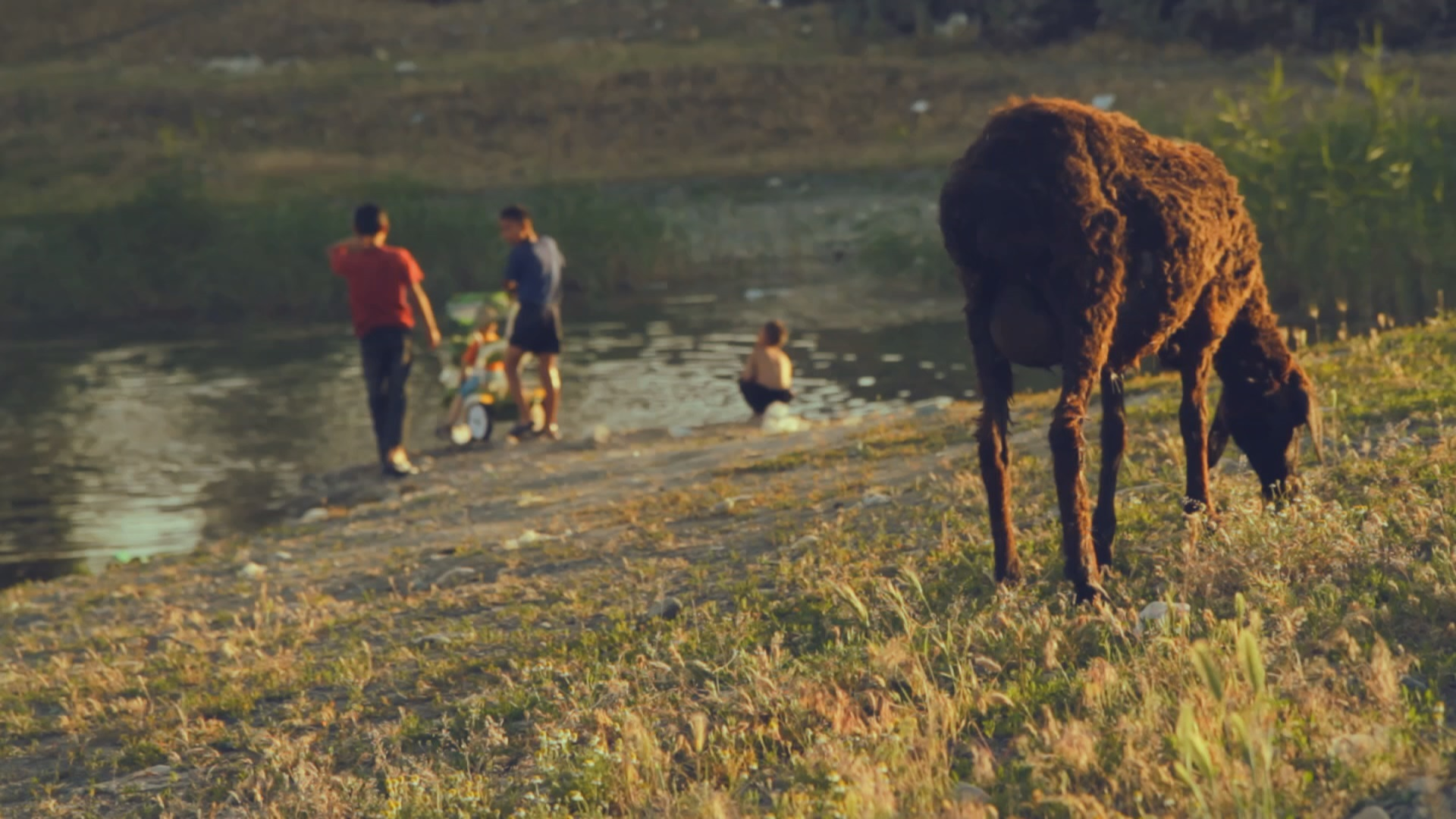 The Life of a Modern-Day Shepherd