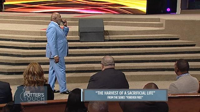 The Harvest of a Sacrificial Life